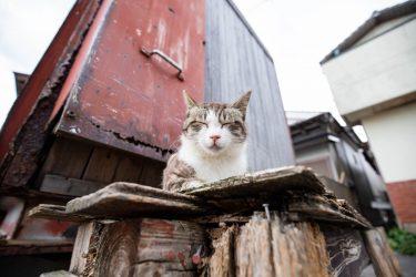 【2019年6月】福岡で有名な猫の島、相島(あいのしま)の最新情報